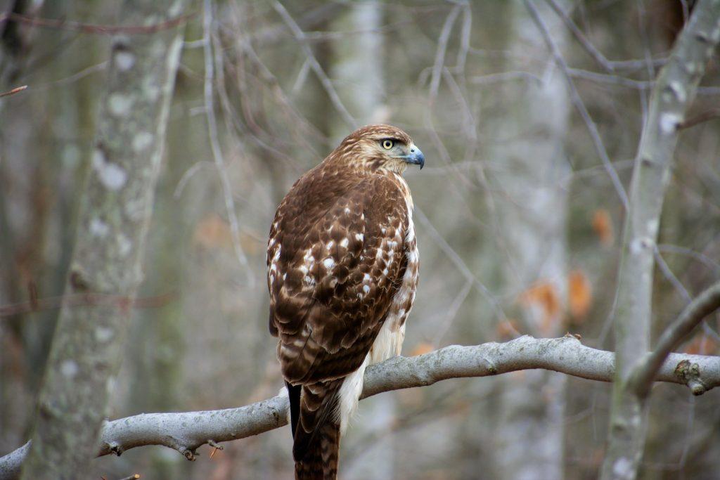 attracting-birds-to-the-winter-hawk
