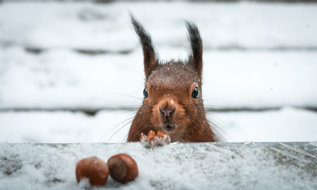 attracting-birds-to-the-winter-squirrel