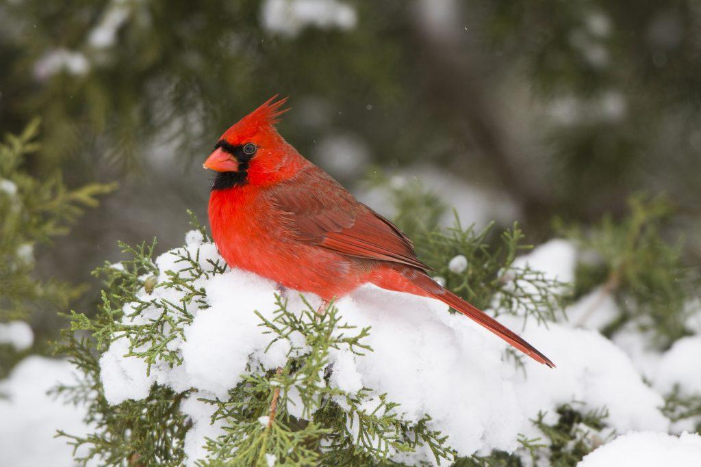 alsip-attracting-birds