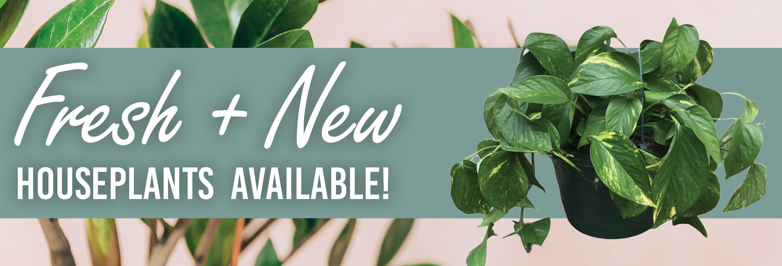 Fresh Houseplant Stock Availale