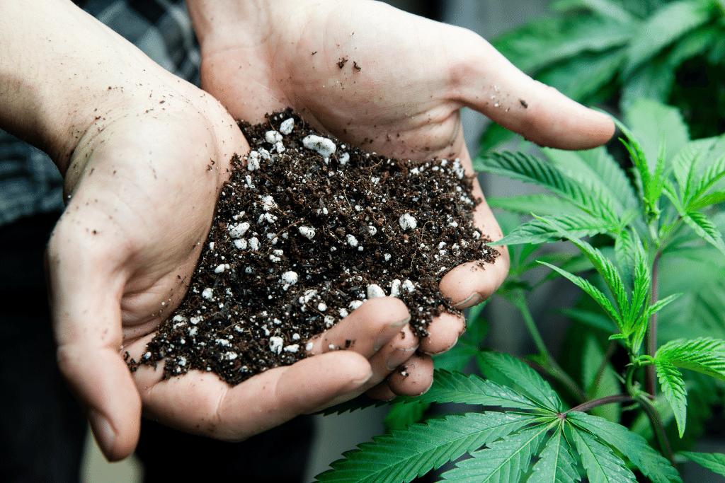 Alsip Cannabis Cultivation marijuana soil with fertilizer close up