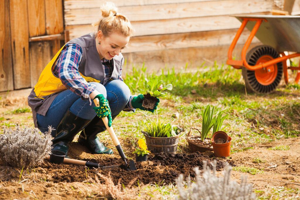 alsip woman planting in spring garden