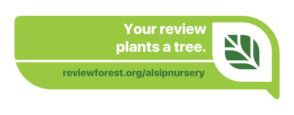 REVIEW FOREST
