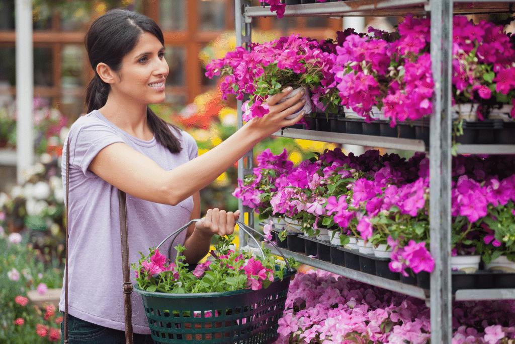 woman picking out flowers at a garden center alsip nurseries