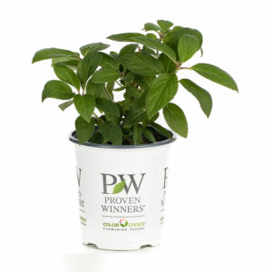 Spring Plant Shipping