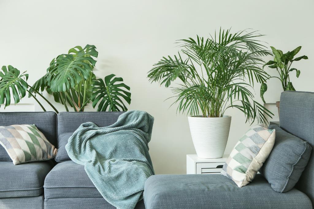 tropical plants inside of a living room