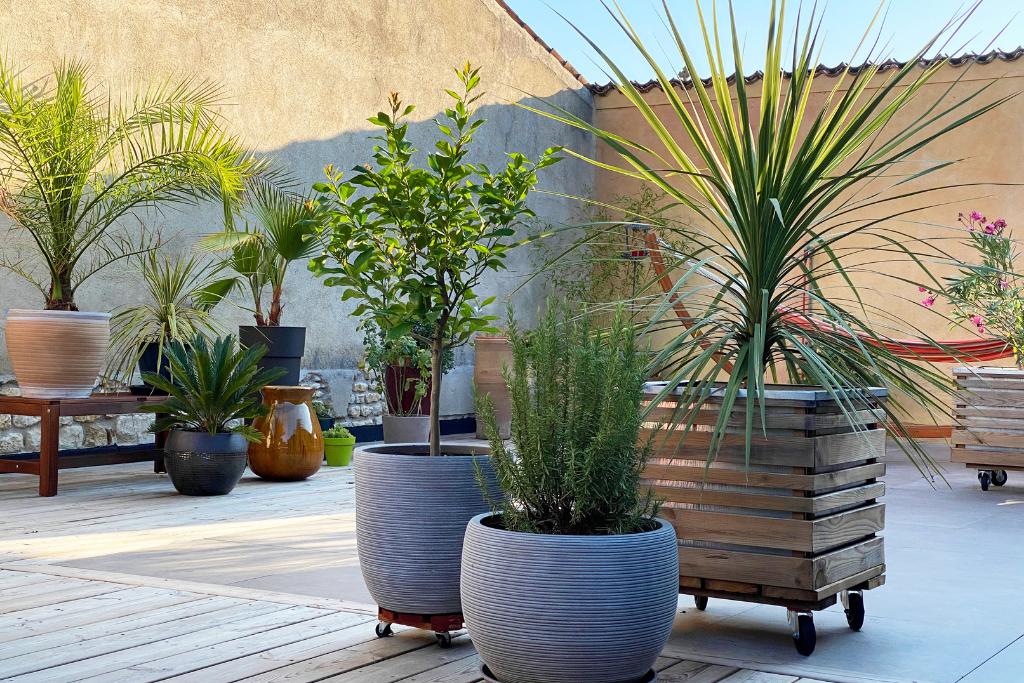 tropical plants on a patio alsip nurseries