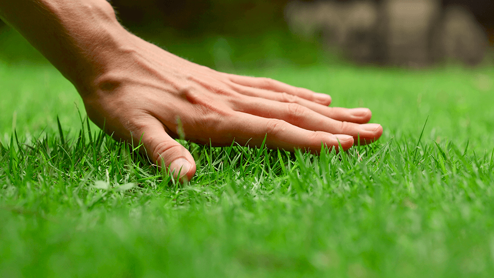 hand touching healthy lawn