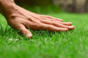 touching grass Alsip nursery