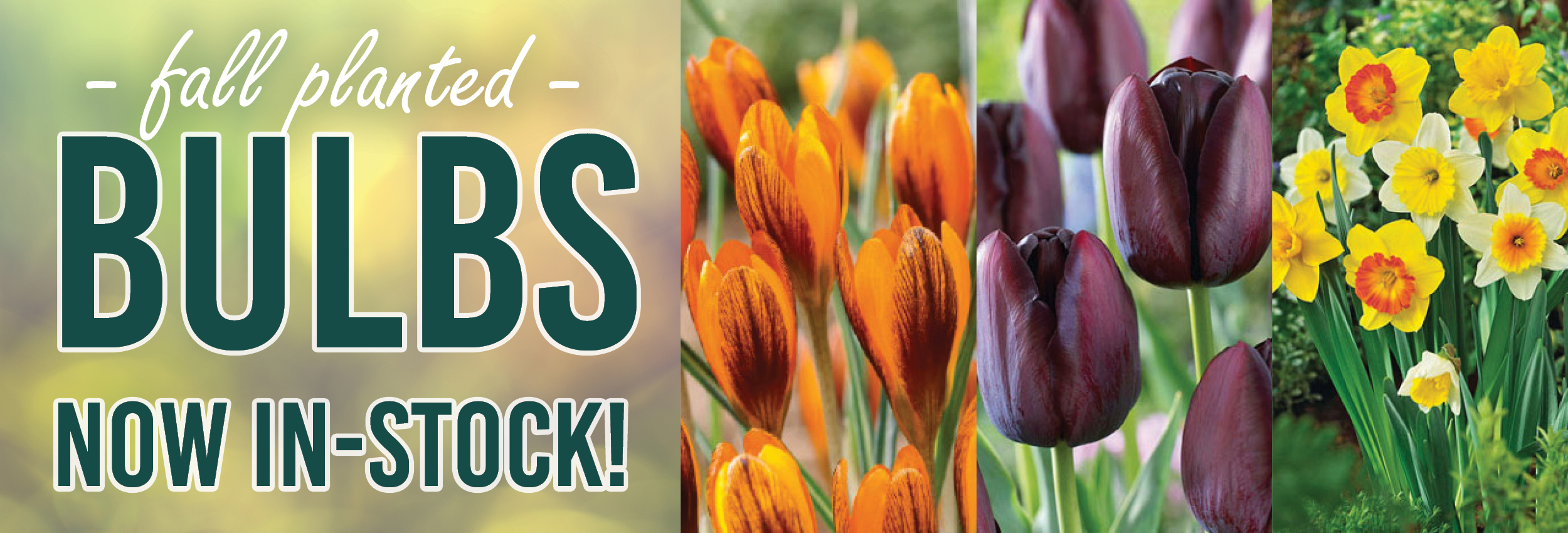 Fall Planted Bulbs Now In Stock