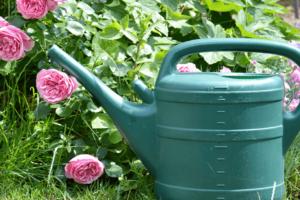 Alsip Nursery Watering Can