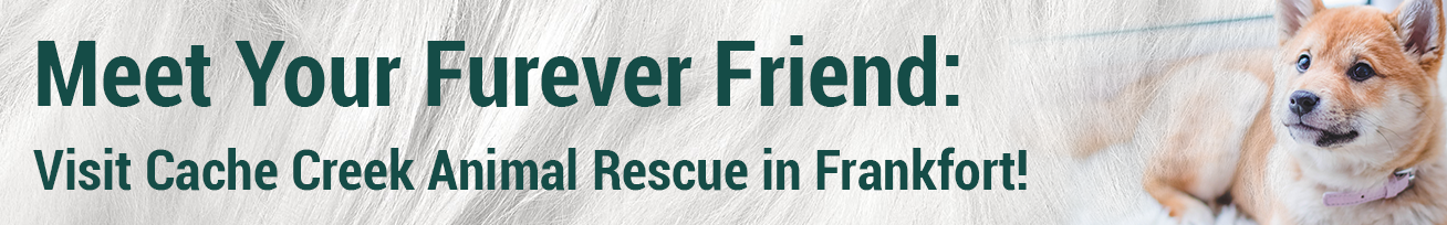 Meet Your Furever Friend at Cache Creek Animal Rescue in Frankfort!