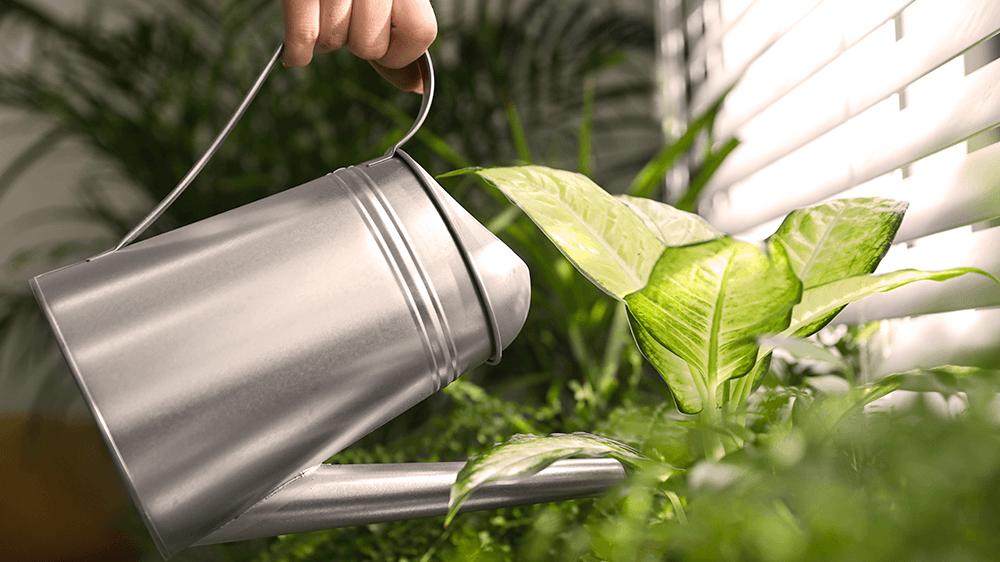 Alsip nursery - person watering houseplants