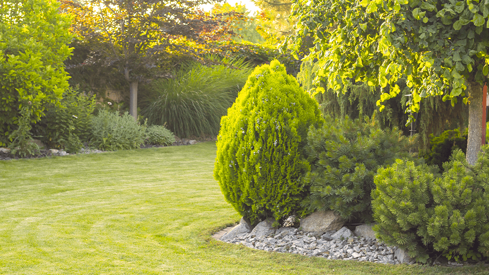 Alsip nursery trees and shrubs in backyard