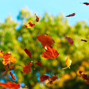 Falling autumn tree leaves in the air